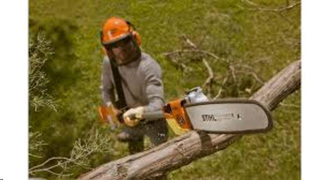 Where to find 14     GAS   EXTENDABLE POLE TREE SAW in Kalispell